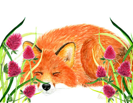 Fox sleeping in the grass. Watercolor illustration. Fox fell asleep in the beautiful spring grass. Background for design, printing on paper, fabrics. Illustration for advertising.
