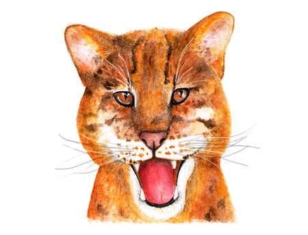 Catopuma temminckii. Watercolor illustration. Catopuma. Asian Golden cat. Illustration for printing on t-shirts, fabrics, magazines about animals.