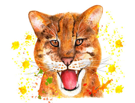 Portrait of a catopuma temminckii. Watercolor illustration. Portrait of catopuma in splashes of watercolor paints. The asian golden cat.