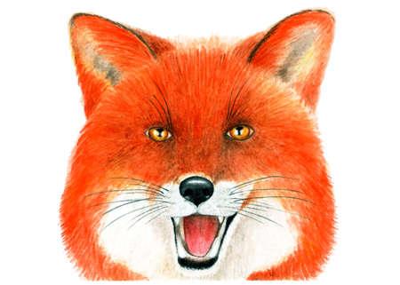Portrait of Fox. Watercolor illustration.Portrait of a Fox painted in watercolor. Illustration for printing on t-shirts, fabrics, magazines about animals.