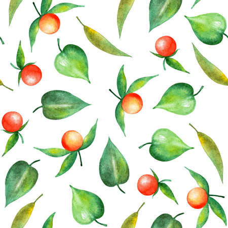 Seamless pattern with physalis berries. Watercolor illustration.Summer illustration for printing. Botanical background. Great pattern for summer dresses, skirts, bags. Stock Photo