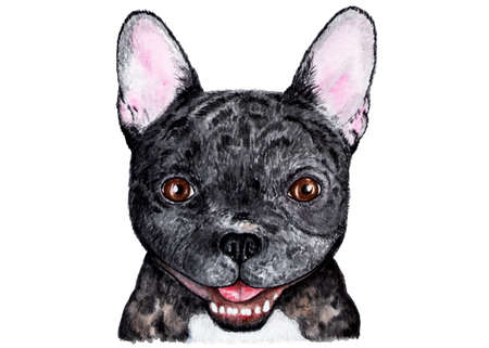 French bulldog. Illustration painted in watercolor. Portrait of a black french bulldog. Funny illustration. Illustration for printing on childrens jackets, t-shirts. Stock Photo