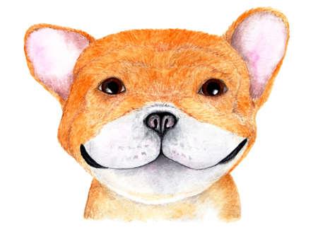 English bulldog. Watercolor illustration. Portrait of an English bulldog. The dog smiles and looks up. Illustration for printing on t-shirts, animal feed, etc.