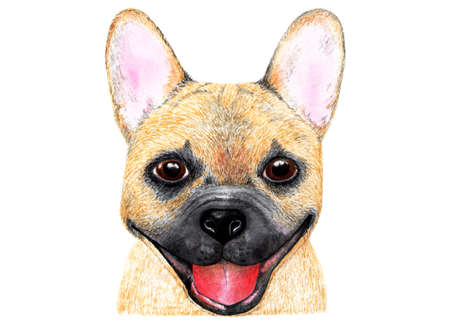 French bulldog. Watercolor illustration. Portrait of a french bulldog. The dog is smiling. Illustration for printing on t-shirts, caps, bags, pet food, etc.