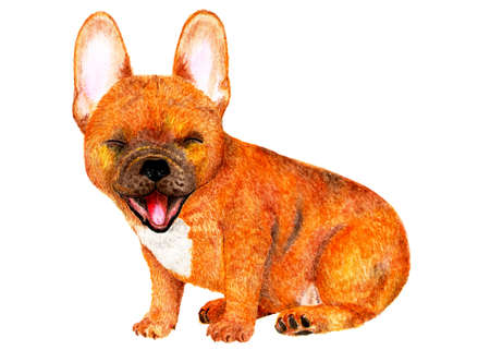 French bulldog. Watercolor illustration. Portrait of a brown French bulldog. Dog sits and smiles. Illustration for printing.