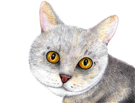 Portrait of a gray cat. Scottish cat. Watercolor illustration. Portrait of a cat with amazing eyes. Illustration for design, decor. Stock Photo