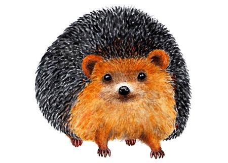 Hedgehog Watercolor illustration. Portrait of a hedgehog. Forest animal. Fairy tale hero. Illustration for design, decor.