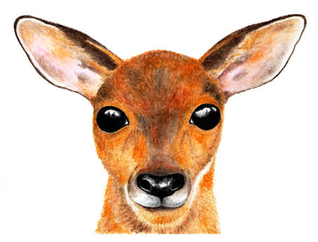 Portrait of roe deer. Watercolor illustration. The deer's looking directly at the camera. Baby looks big eyes. Illustration for design, decor, printing. Stock Illustration - 111561721