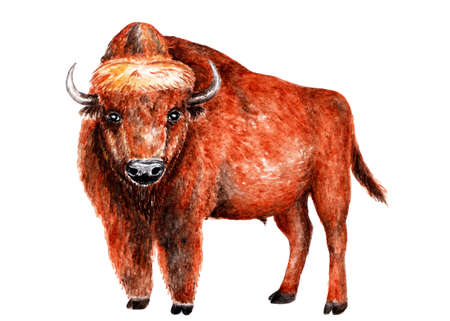 Aurochs. Watercolor illustration. A beautiful bison looks at the camera. Illustration for design, decor. Stock Photo