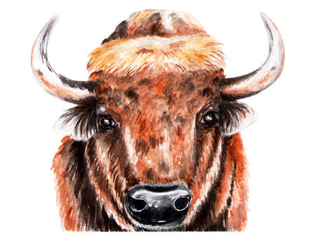 Portrait of bison. Watercolor illustration. The bison looks at the camera. Forest animal. Stock Photo