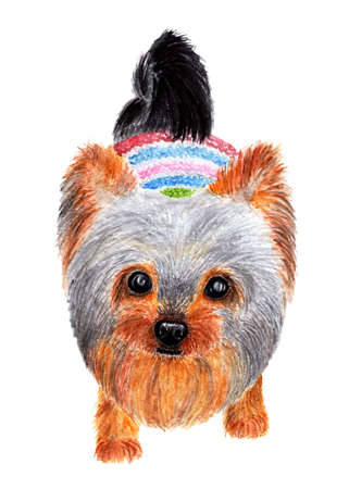 Yorkshire terrier. Watercolor illustration. Cute dog looks at the camera. Fashionable dog dressed in bright knitted sweater. Stock Photo