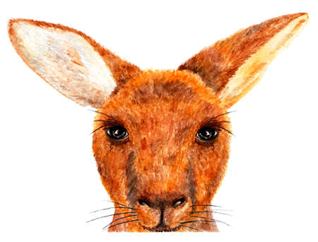 Kangaroo. Watercolor illustration. Portrait of kangaroo. Illustration for design, decor. Looks great on clothes. Stock Photo