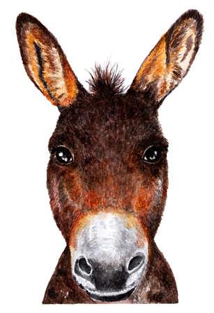 Donkey. Watercolor illustration. Portrait of a donkey. Illustration for design, decor.