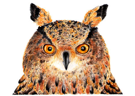 Eurasian eagle owl. Watercolor illustration. Portrait of an eagle owl. Drawing made in watercolor for your design.