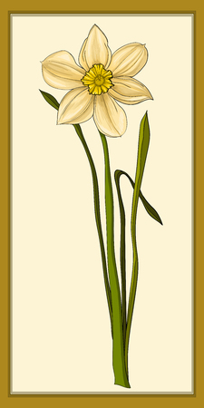 Daffodils, colored vector images. Hand drawn illustration. Yellow background