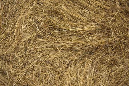 干し草のテクスチャのクローズアップ 写真素材