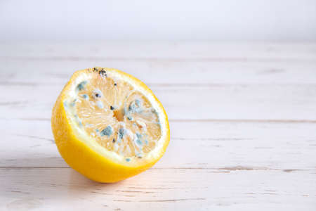 Spoiled half of lemon with fungus on a white background. Side view, with copy space, horizontal orientation.