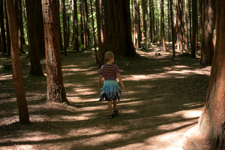 A young boy explores a redwood forest near Rotorua in New Zealand  photo