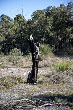 remains: Scenic remains of a burnt tree in Whiteman park Stock Photo