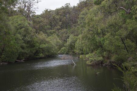 karri: Warren River landscape in Warren National Park Stock Photo