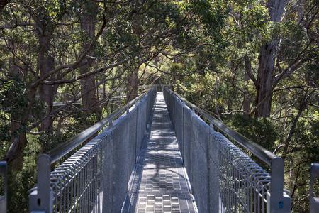 giants: Tree Top Walk bridge in the Valley of the Giants