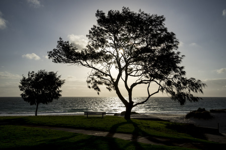 wind blowing: A sunset with a large tree and strong wind blowing on a City Beach in Perth Western Australia