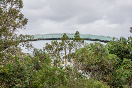 karri: A view of an observation walking bridge in Kings Park and Botanical Gardens in Perth Western Australia
