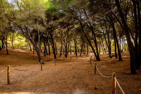 mallorca: A rope fenced walking path with leaning trees through a small natural reserve from Can Picafort to Alcudia, Majorca Stock Photo