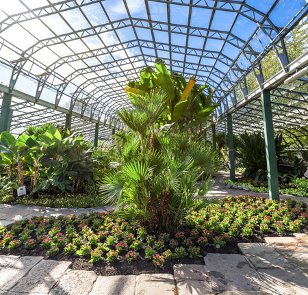 Plants inside of a main hall in David Welch Winter gardens, Duthie Park, Aberdeen, Scotland Stock Photo