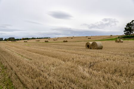 A field of rolled packs of hay in autumn season, Aberdeenshire, Scotland