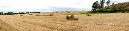 A panorama of the large field with multiple packs of rolled hay in countryside of Aberdeenshire, Scotland