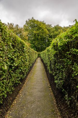 A long path to the exit or dead end inside Hazzlehead hedge maze, Aberdeen, Scotland