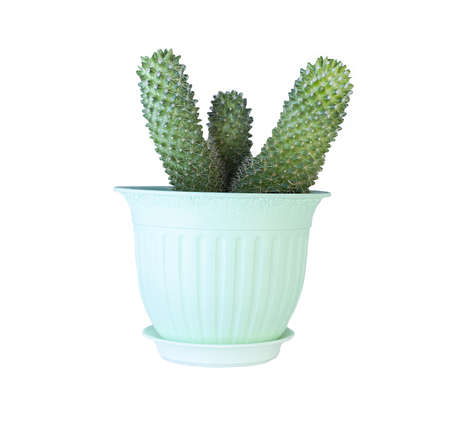 Cactus plant in pot isolated on white background. Decoration minimalist style Banco de Imagens
