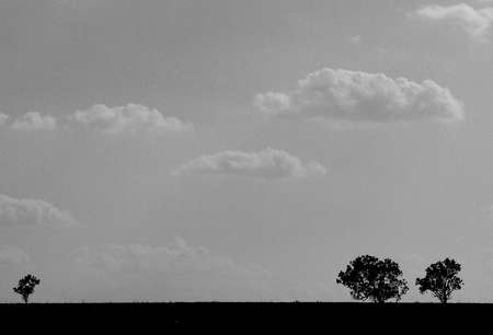 Silhouettes of trees on a grey background