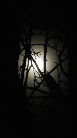scarry: Tree infront of moon Stock Photo
