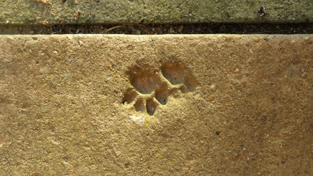 inprint: cat paw print in stair