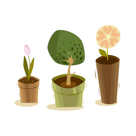 buttercups: Green plants with flowers on a white background in brown pots for postcards and illustrations. Vector Image. Templates flower beds and gardens