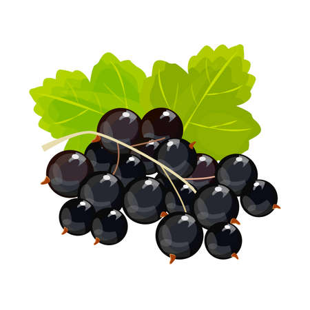 Black currant isolated on white background.