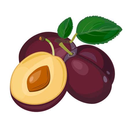 Plum Berry. Illustration