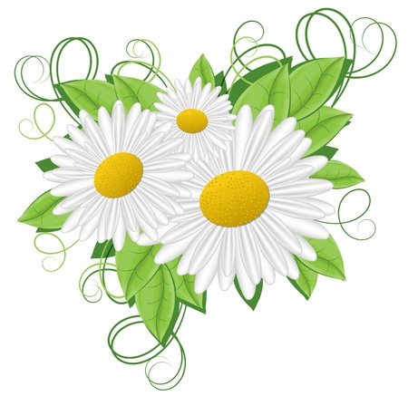 white daisy: flower camomile