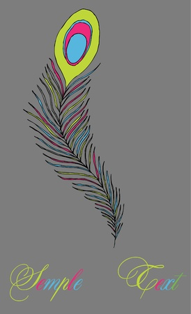 multicolored peacock feather   Vector