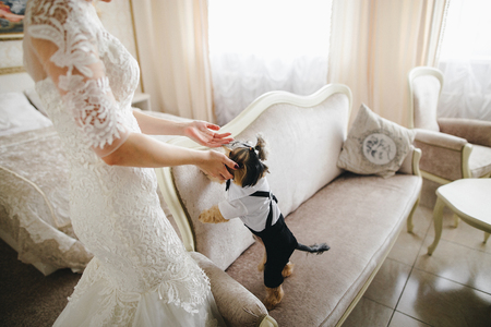Dog in the room of the bride