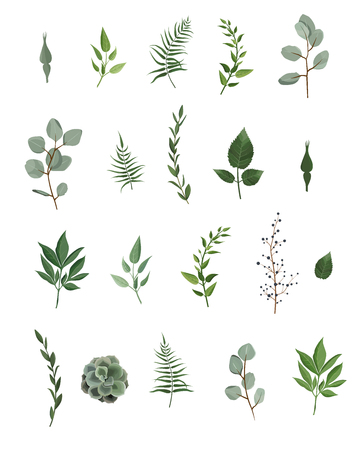 Vector designer elements set collection of green eucalyptus, art foliage natural leaves herbs in watercolor style. Decorative beauty elegant illustration for design