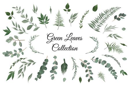 Vector designer elements set collection of greeng leaves herbs in watercolor style. Decorative beauty elegant illustration for design Illustration