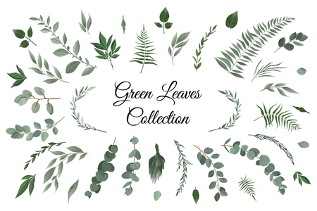 Vector designer elements set collection of greeng leaves herbs in watercolor style. Decorative beauty elegant illustration for design Vettoriali