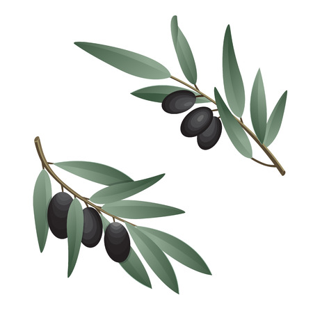 Olive branch in watercolor style. Design for olive oil, natural cosmetics, health care products