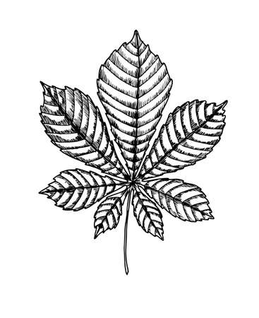 Chestnut leaf. Isolated on white background. For cards, invitations, congratulations, party feeding Illustration