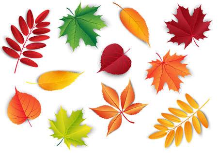 Set of autumn leafs. Forest botanical elements for decoration. Vintage fall seasonal decor.