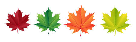 Autumn vector set with maple leaves. Forest botanical elements for decoration. Illustration