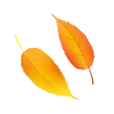 Autumn vector set leaves. Forest botanical elements for decoration.